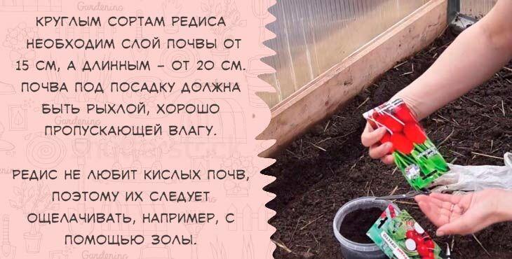 посадить редис в теплице в марте