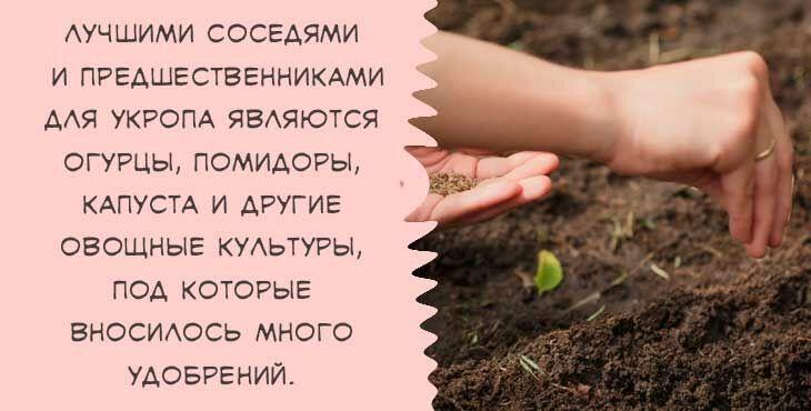 Какую почву любит укроп: почему в открытом грунте пряность растет более ароматной, а также выбор кислой или щелочной земли для выращивания