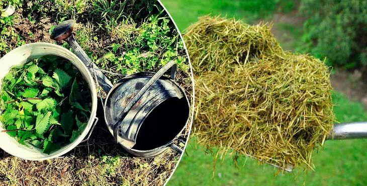Удобрение из травы и сорняков в бочке