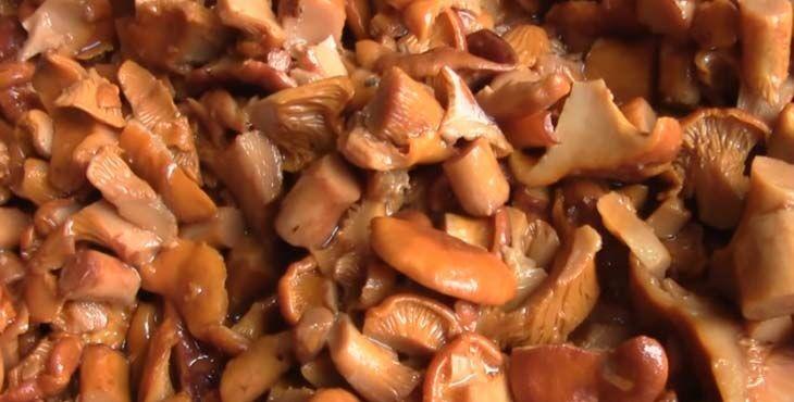 Жареные лисички, рецепты: на сливочном масле с луком и без него, без отваривания