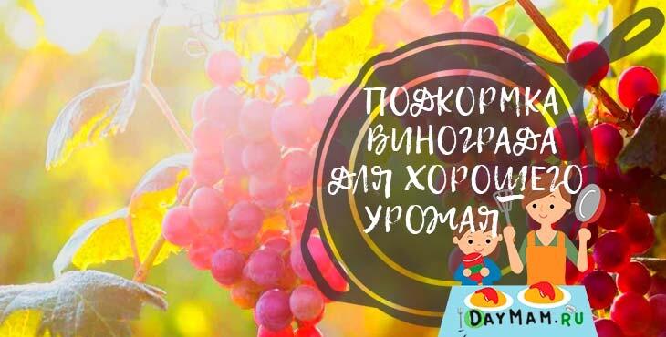 Подкормка винограда весной и летом