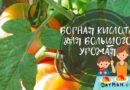 Борная кислота для томатов и огурцов: как применять